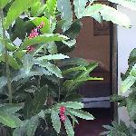 """Rooms """"hidden"""" in the vegetation"""