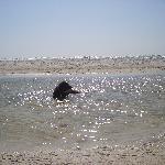 relaxing in fresh water pool