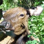 Elk grazing behind the gazebo
