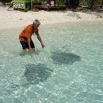 Stingrays for a visit