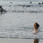 Bolinas dog friendly and surfing beach