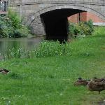 même les canards se plaisent sur ce magnifique & verdoyant cannal