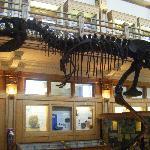 The largest exhibit, a dinosaur skeleton