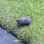 pond life next door