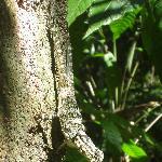 a friendly lizard