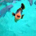 fish needing dentistry