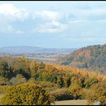 Royal Forest of Dean