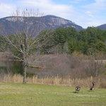 Foto de Table Rock State Park