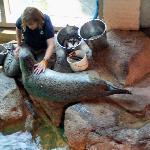 Sea lion feeding time