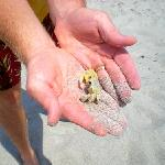 Crab!!  Isn't he cute!