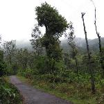 Coffee estate near homestay