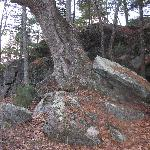 Trees growing out of rock