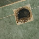 the shower drain