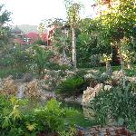 Garden view....