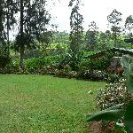 The Crocquet Lawn