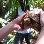Boka Boka Reptile Park near Pinewood