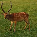 Lovely creature on Wakakusa Hill