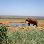 Elephant Tsavo East
