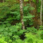Lush greenery and vivid foliage