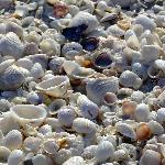 Shells- 400 varities wash up