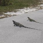 Bill Baggs Cape Florida State Park Foto