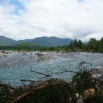 Quinault river just upstream from lake