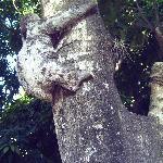 el perezoso del zoo de santa cruz