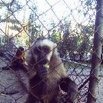 el mOno del zoo santa cruz