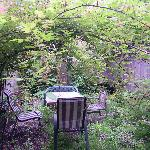 the garden of the studio