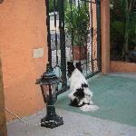 Beware of the guard dog