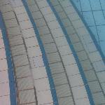 les algues dans la piscine