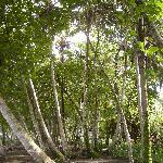 coco palms at Los Cocos