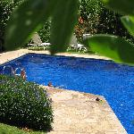 A picture of the pool from a tree. My son took this.