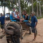 From the hotel to the pier with our water buffalo transport.