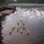 My clan of ducks i would have coffee with
