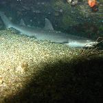 Foto de La Laguna Beach Club & Dive Centre