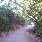 On the trail from San Mateo Campground to Trestles, May 2008