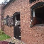 Three friendly horses in the stable block opposite