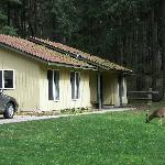 moran state park vacation house (and deer)