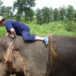 Interract with elephants.
