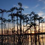 Cuyabeno Lagoon at Sunset