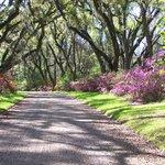 Aftron Villa Gardens Allee