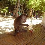 say hi to Justin the pet monkey