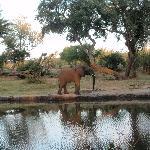 Elefante por la orilla del Zambeze