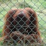 MonkeyWorld-Dorset4