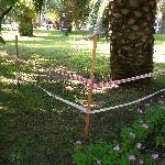 Le jardin de palmiers