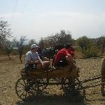 Off road adventure - horse & cart