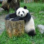 A panda i saw at the beach