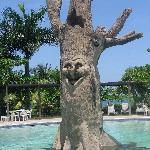 The Laughing Tree... Put a smile on our face even  on the rainy days!!!