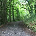 Ireland: co. Westmeath - Belvedere House, Woodland Walk